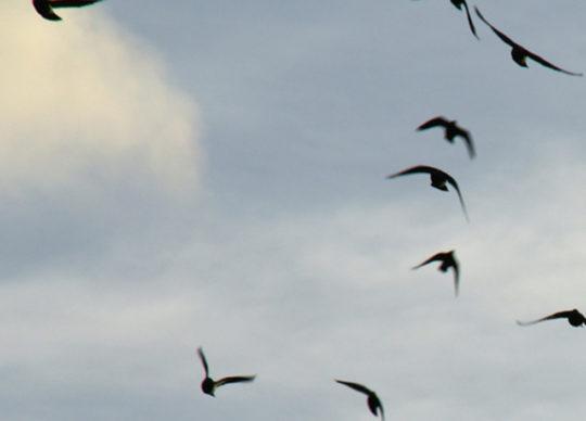 46 – Dogen's Genjokoan Part 5: Birds Fly, Fish Swim, a Zen Master Waves a Fan