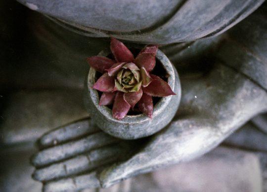66 – Buddha's Teachings 8: The Four Brahmaviharas, or Sublime Social Attitudes – Part 2
